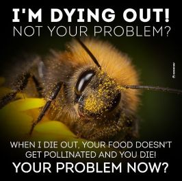 bees dying