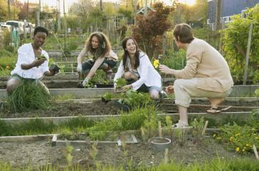 people-working-in-a-community-garden
