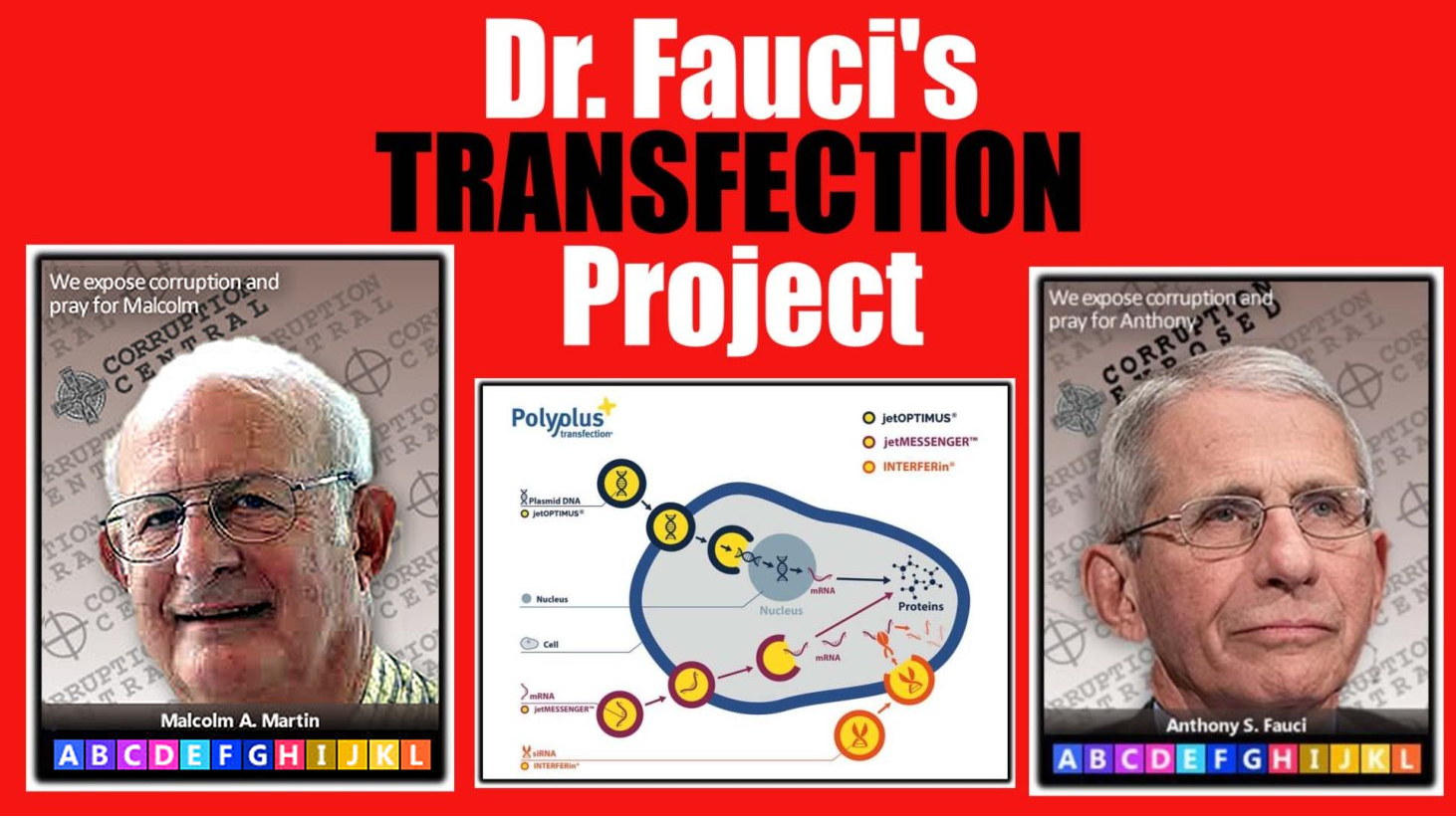 transfection-project-thumbnail